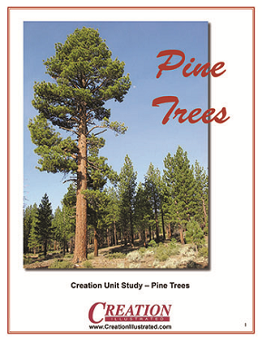 unit-study-pine-trees-by-creation-illustrated